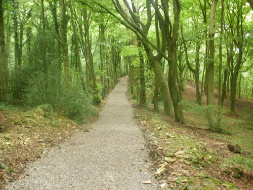 A nice path through a forest on the cotswold Way