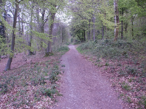 A forest path in the Queen Elizabeth Country Park
